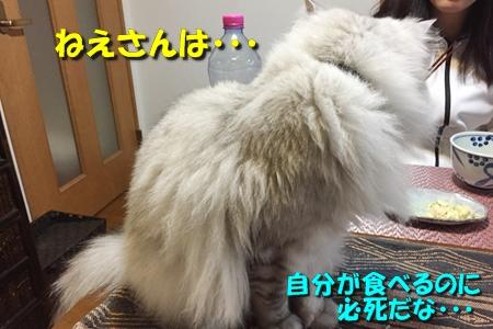 毛ガニ初体験9