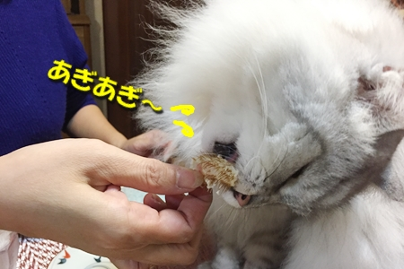 毛ガニ初体験11
