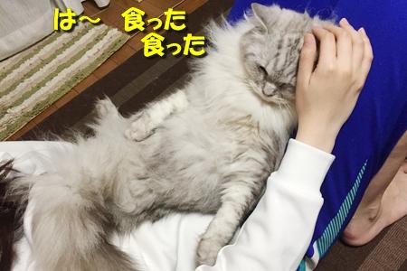 毛ガニ初体験13
