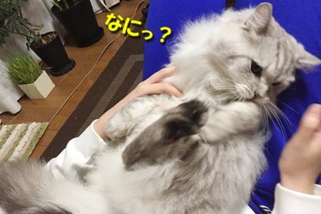毛ガニ初体験14