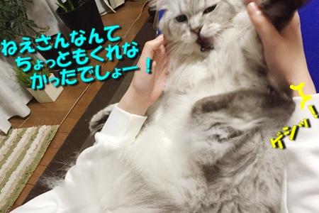 毛ガニ初体験15