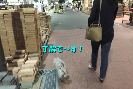 ホームセンターのお散歩(おまけ)3