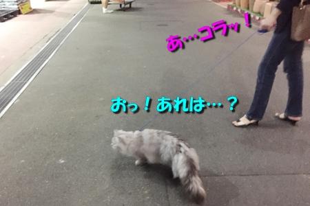 ホームセンターのお散歩(おまけ)4