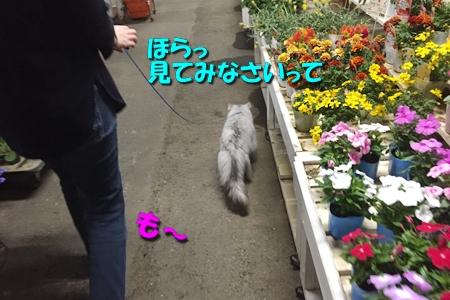 ホームセンターのお散歩(おまけ)9