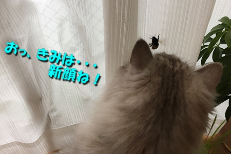 いざ!実戦1