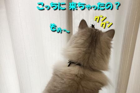 いざ!実戦4