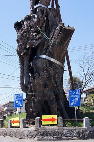 170424群馬県原町の大ケヤキ