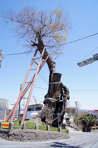 170424群馬県原町の大欅④