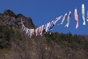 170424親都神社の大ケヤキ④