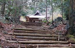 141221八幡神社のイチイガシ