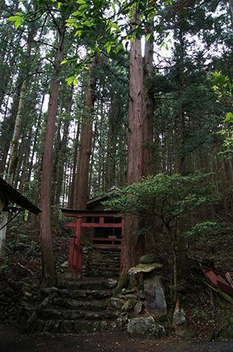 170606南川八坂神社の杉④