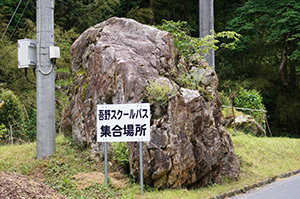 170606南川八坂神社の杉⑥