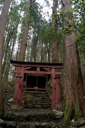 170606南川八坂神社の杉③