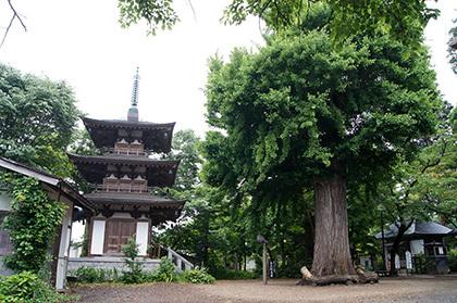 170621恵隆寺 銀杏①