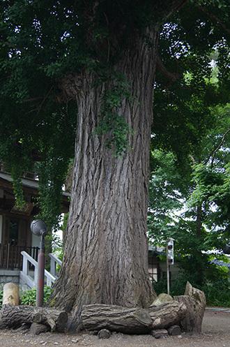170621恵隆寺 銀杏④