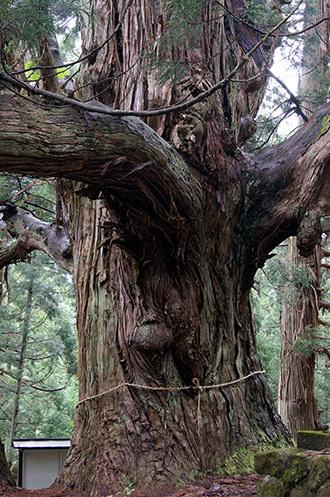 170621温泉神社の大杉⑥