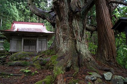 170621温泉神社の大杉⑧