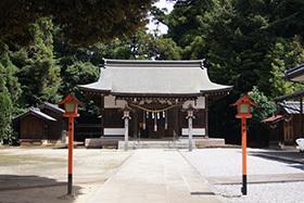 170702伊奈町氷川神社の杉⑤