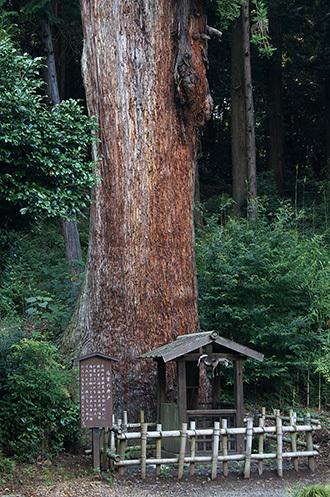 170707大中寺の呑補杉⑤