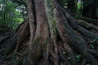 170820成田山公園ケヤキ⑧