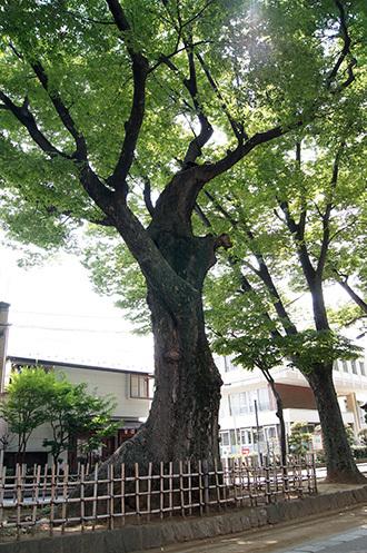 170826大宮氷川神社⑥