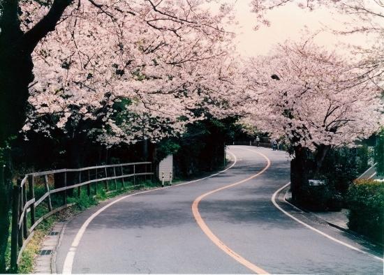 ⑥鎌倉山への道