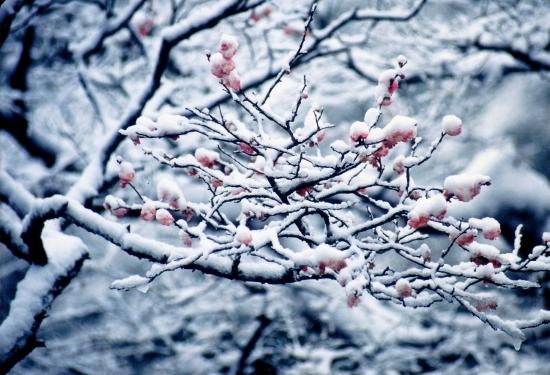 ⑱東慶寺梅に雪
