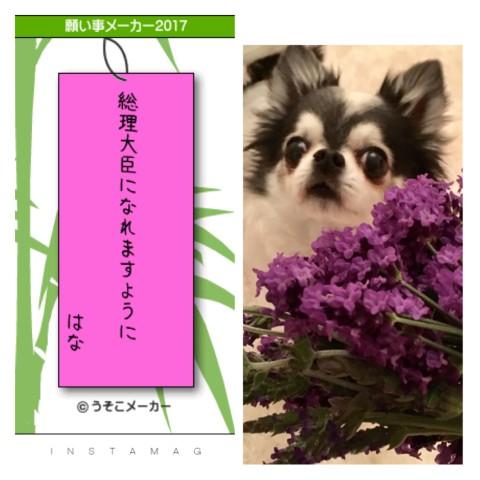 20170707_2.jpg