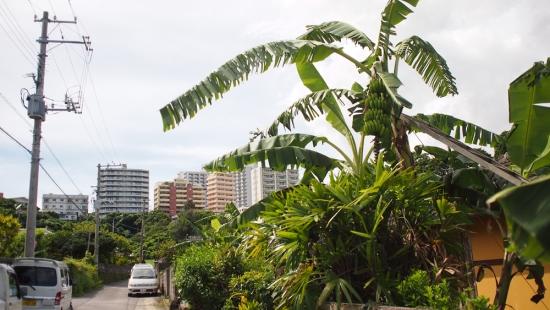 170722_20バナナと丘の上のビル