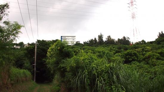170722_12ウーチューガー前の森