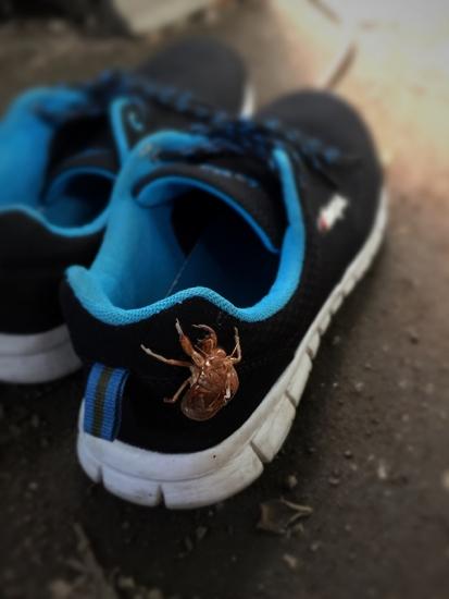 170807_02蝉と靴