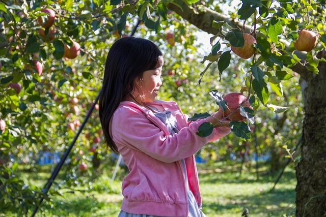 りんご女の子