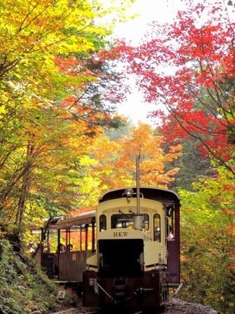 木曽赤沢自然休養林