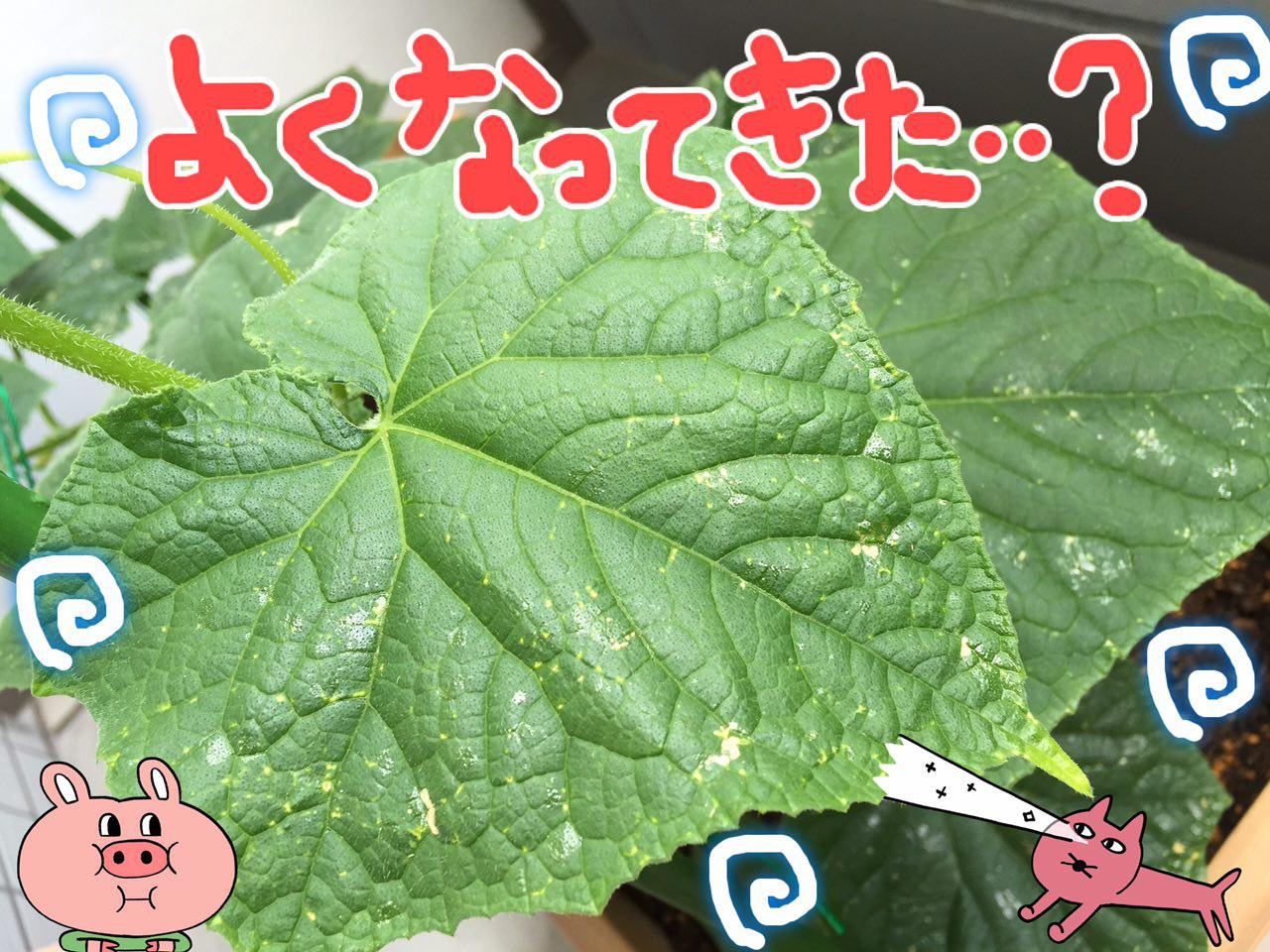 photo_2017-06-05_00-29-34 (2)