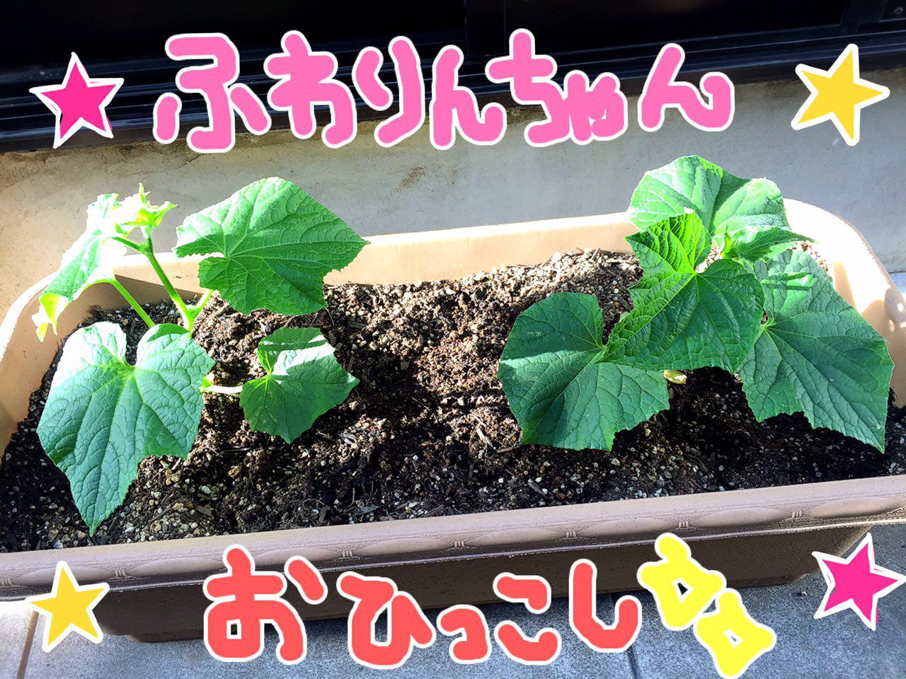 photo_2017-05-24_00-06-51.jpg