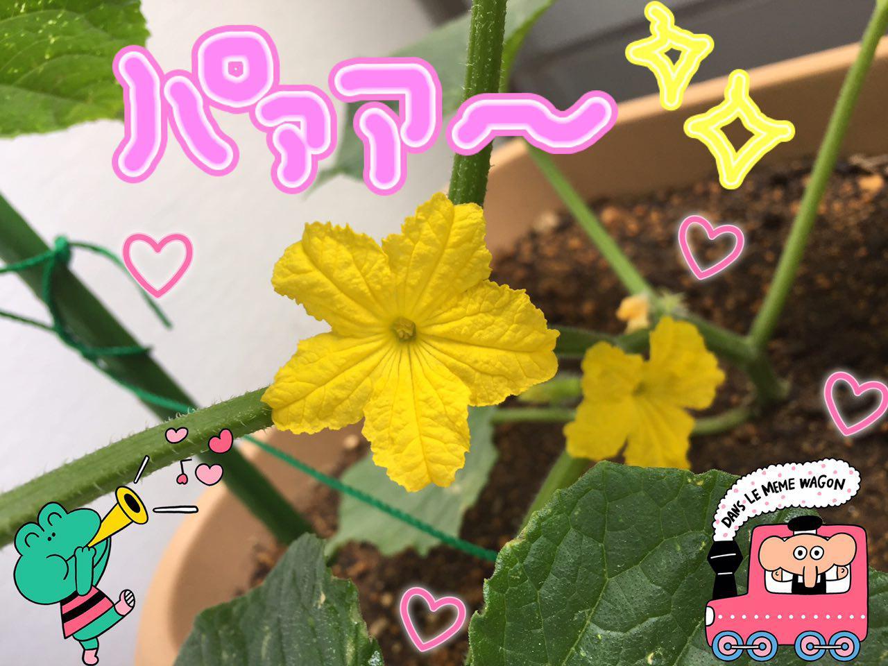 photo_2017-06-05_00-29-34.jpg