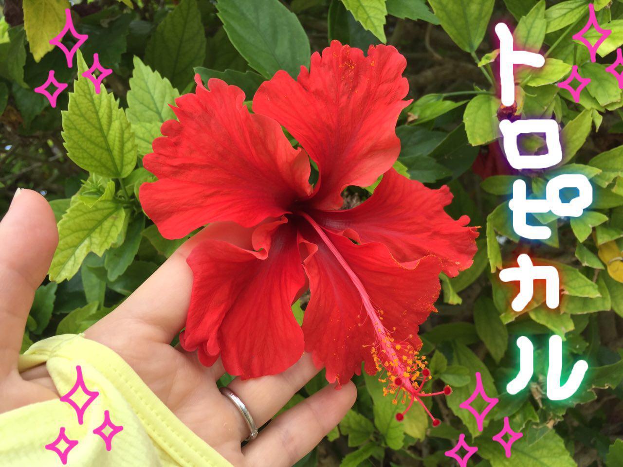 photo_2017-06-06_22-29-43.jpg