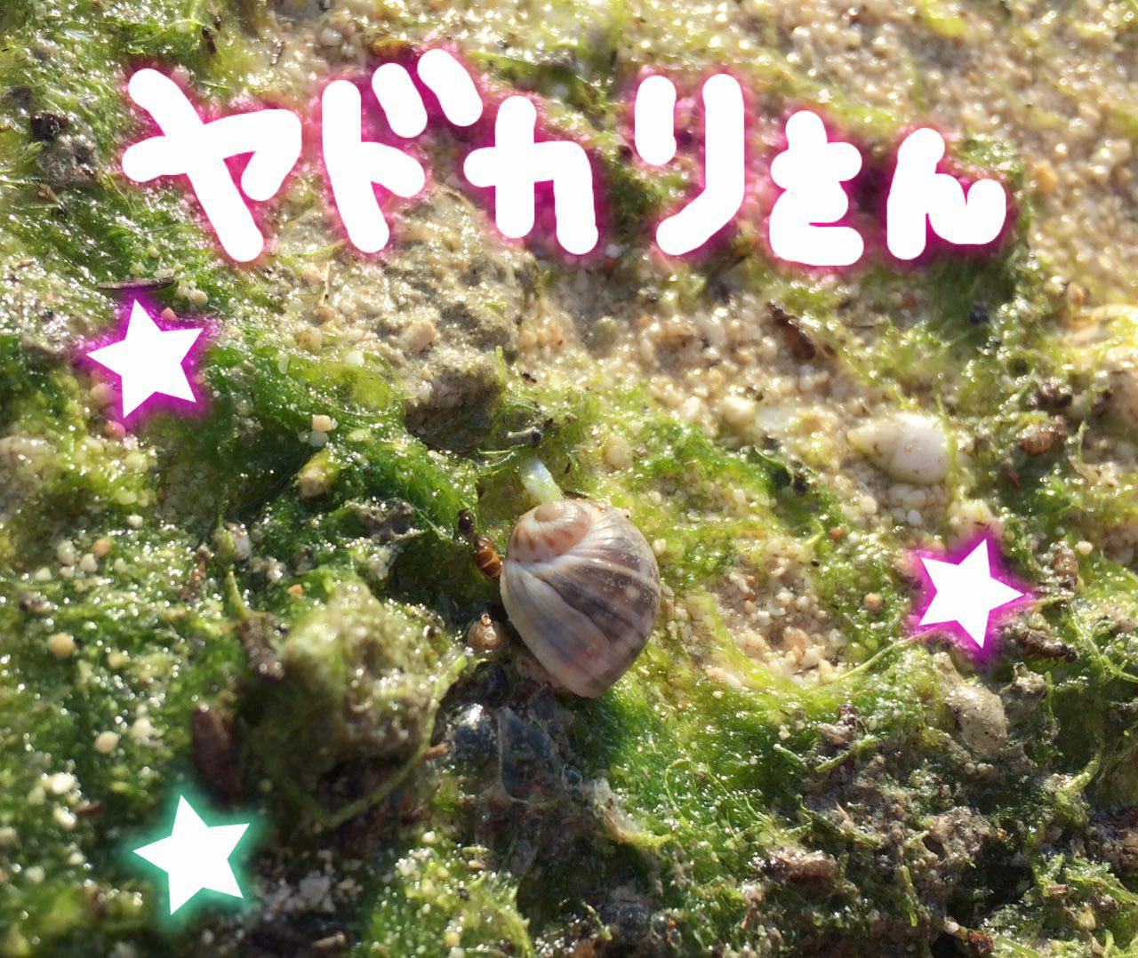 photo_2017-06-08_20-13-31.jpg