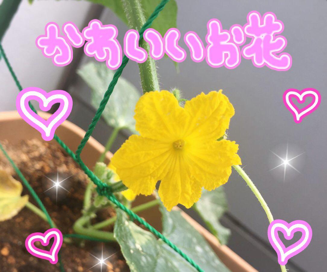photo_2017-06-12_22-14-48.jpg