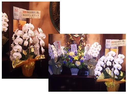 HUBお花