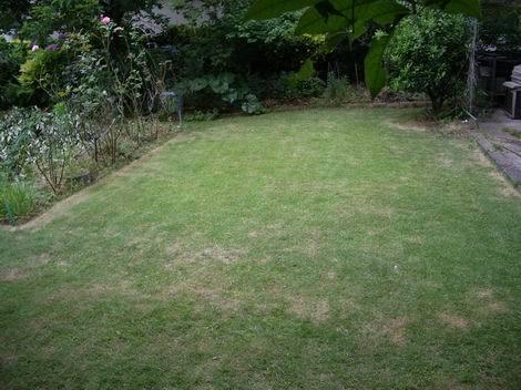 庭の芝刈り(470x352)_20170606