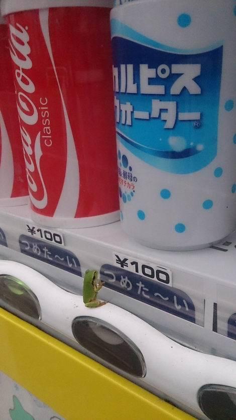 このカエル、カルピス飲みたそう(470x836)