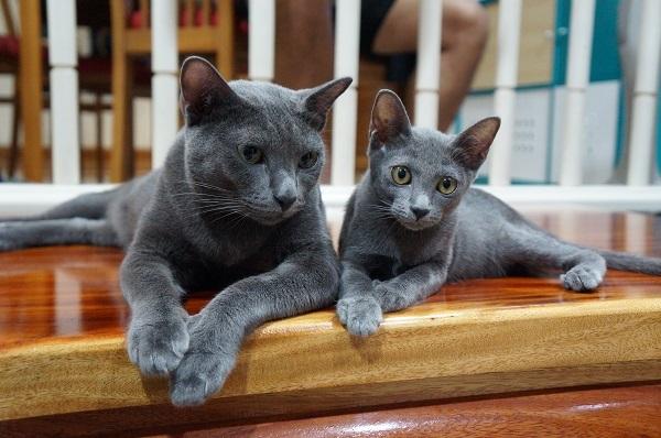 jiw&kitten 3