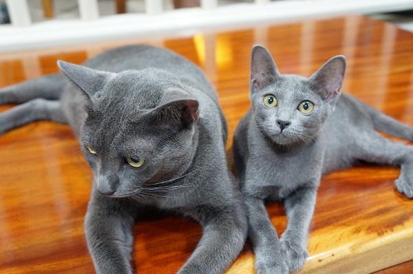 jiw&kitten 5