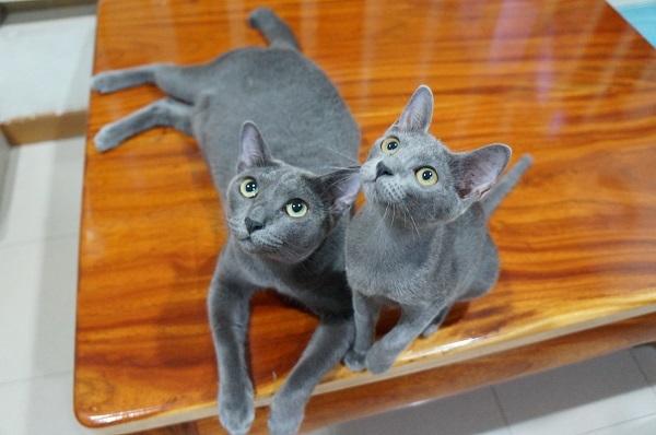 jiw&kitten 4