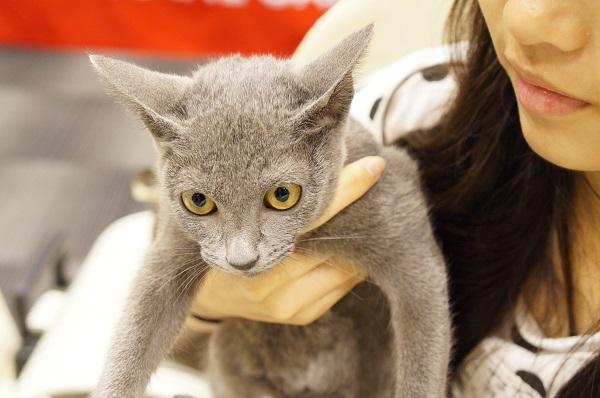 cat show 6
