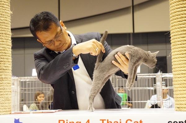 thailand cat show 6