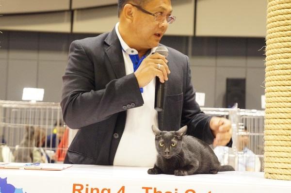 cat show 7