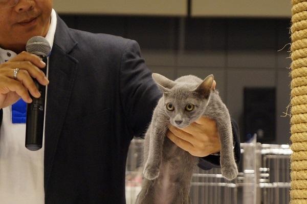 thailand cat show 3
