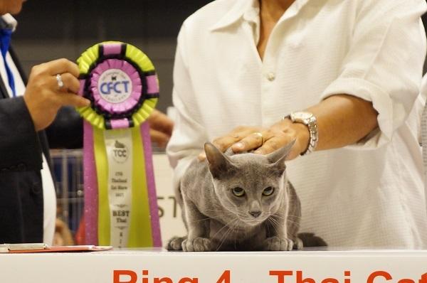 thailand cat show 2